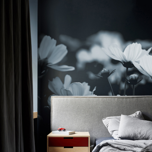 Fleurs de Cosmos Panoramic Wallpaper