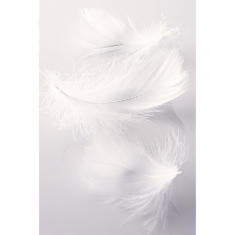 papiers peints plumes 02 sepia