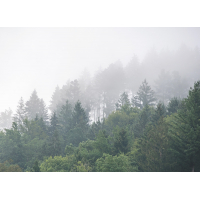 Window fabrics Squid Forest mist